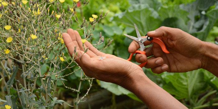 """""""Save Your Seeds"""" Workshop"""