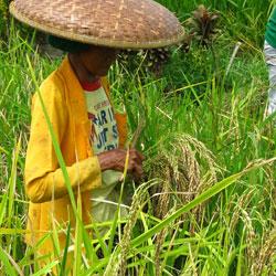 Festival of Millets